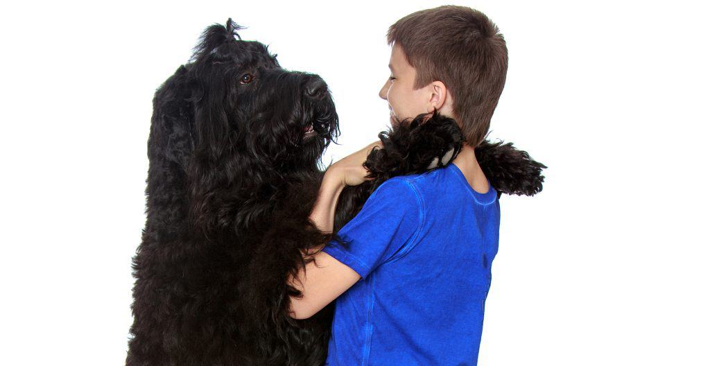 Black-russian-terrier-with-owner