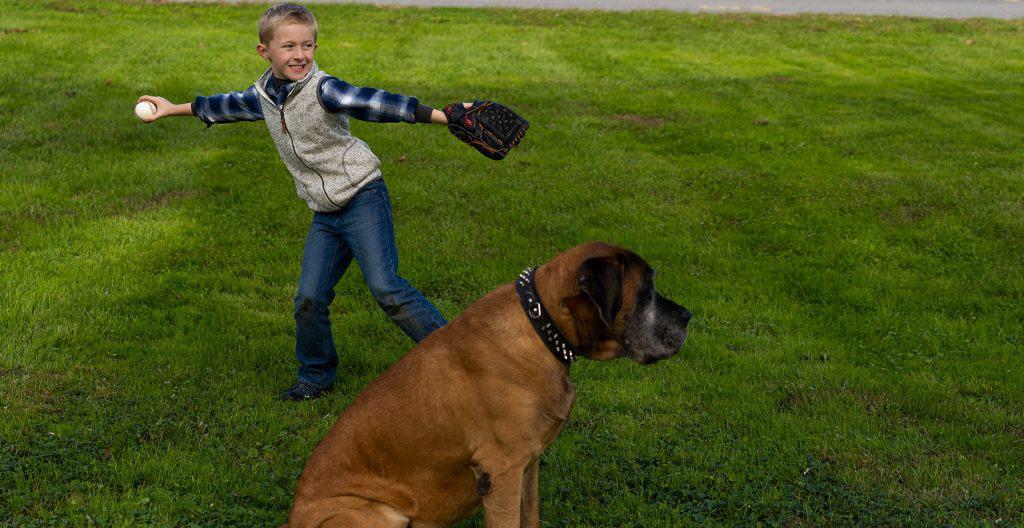 English-mastiff-playing-baseball