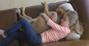 Patterdale-Terrier-with-girl