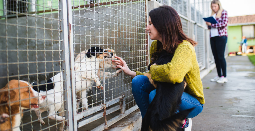 adopt-shelter-dog