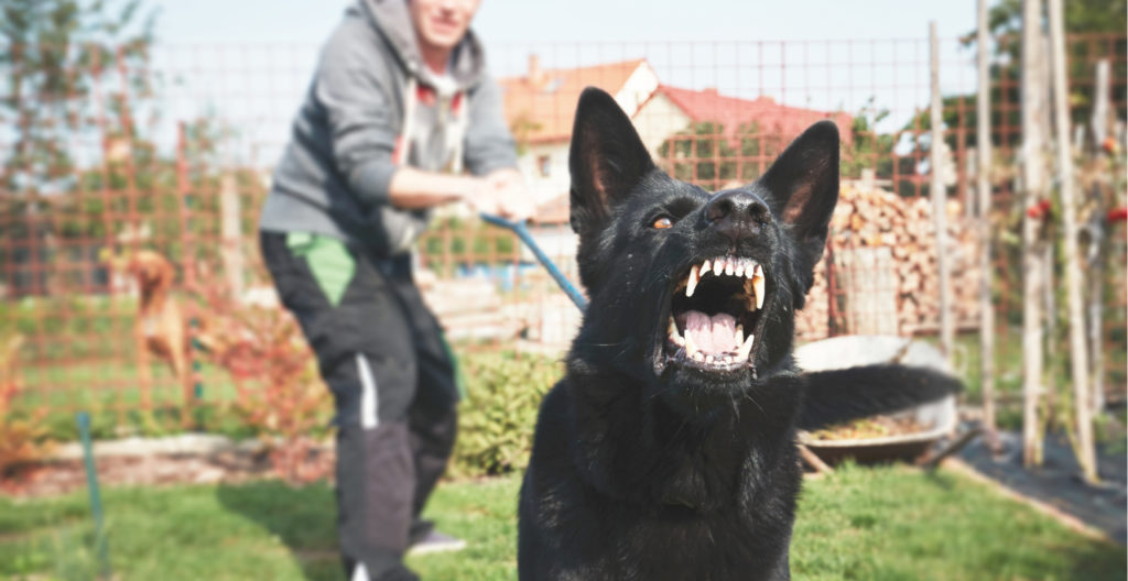 aggressive-dog-training