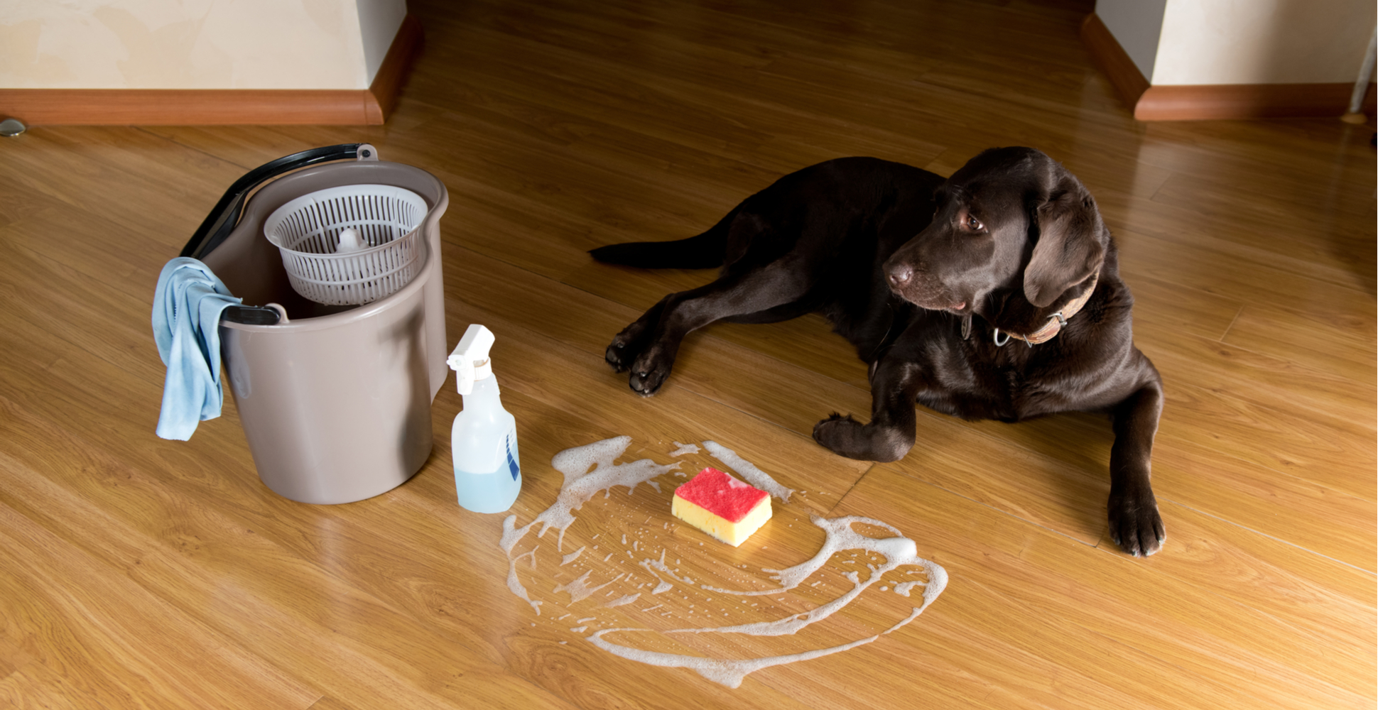 cleaning-up-dog-accidents