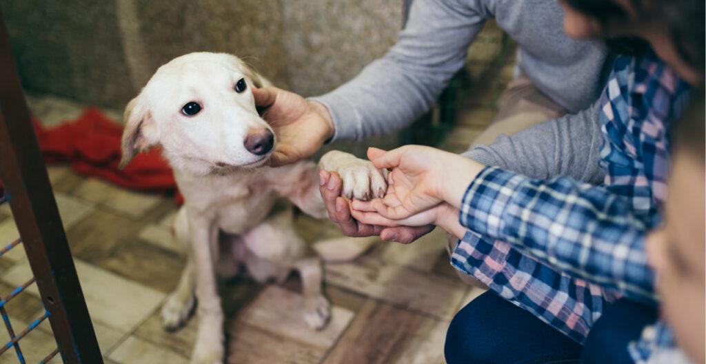 dog-adoption