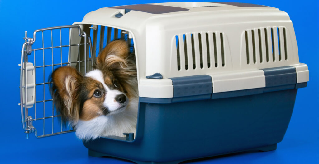 dog-carrier-crate