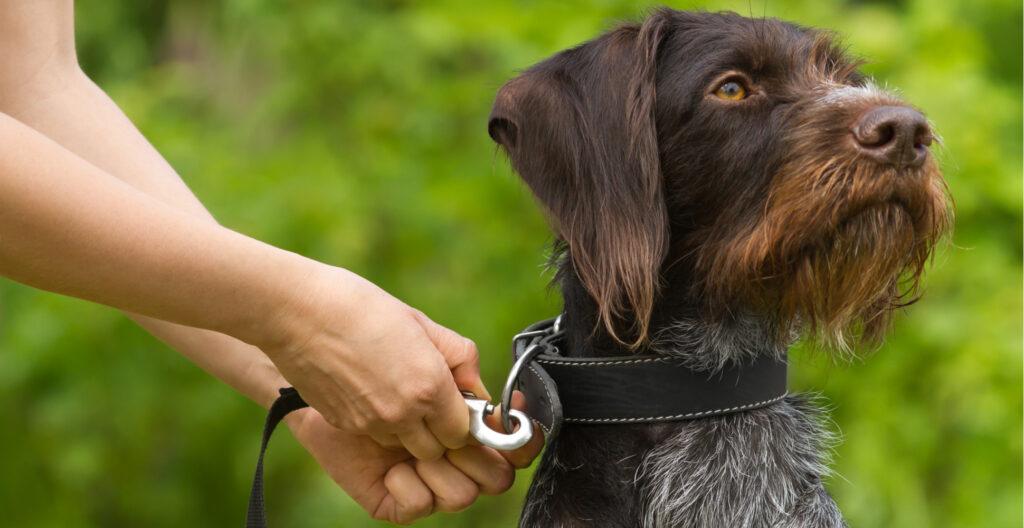 dog-collar-leash