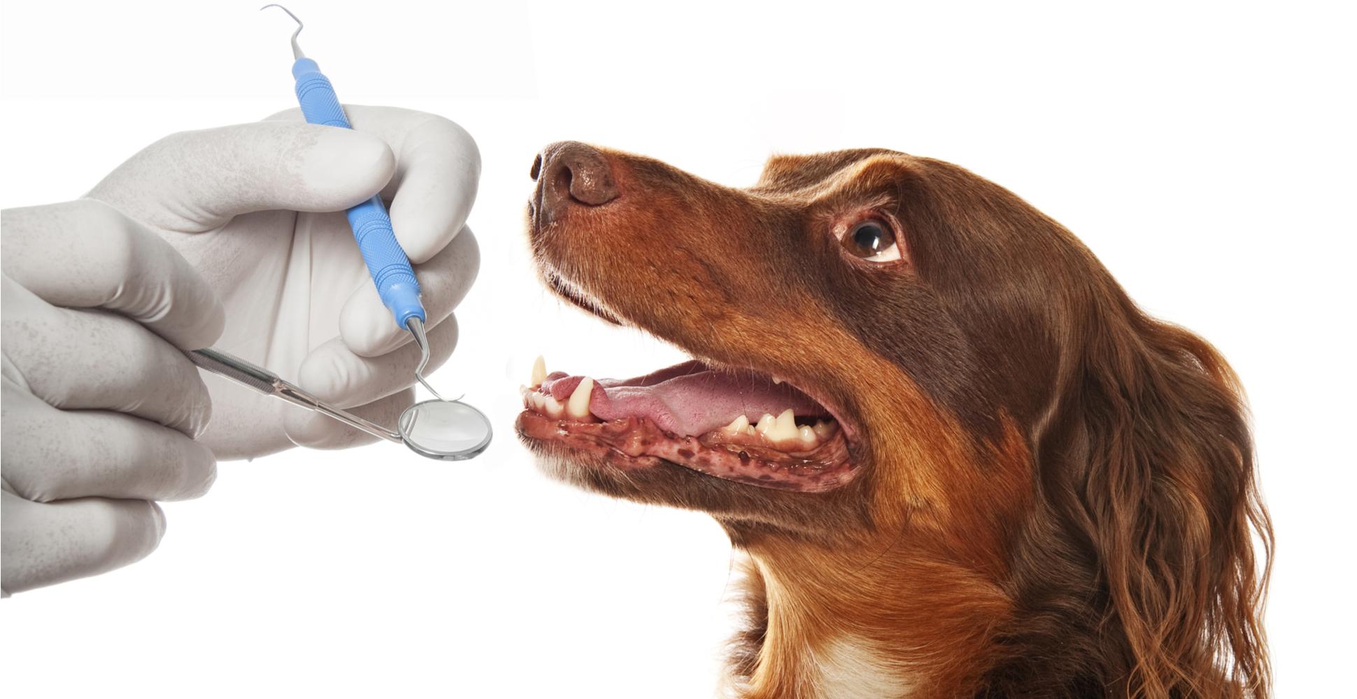 dog-oral-care
