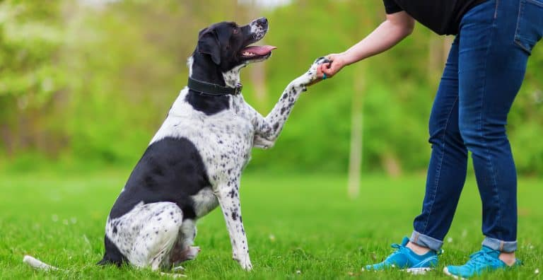 dog-training-guide