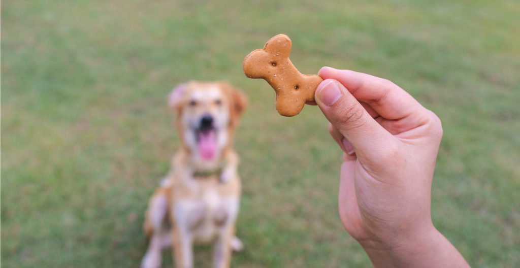 dog-treats-during-training