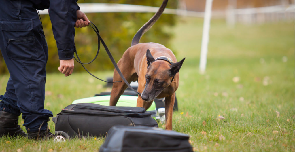 dog-unpredictable-training-methods