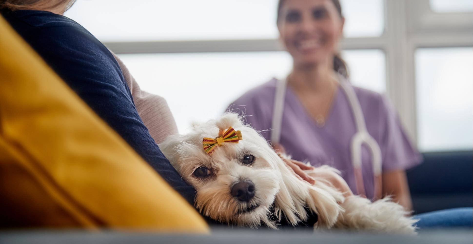 dog-veterinarian-visit