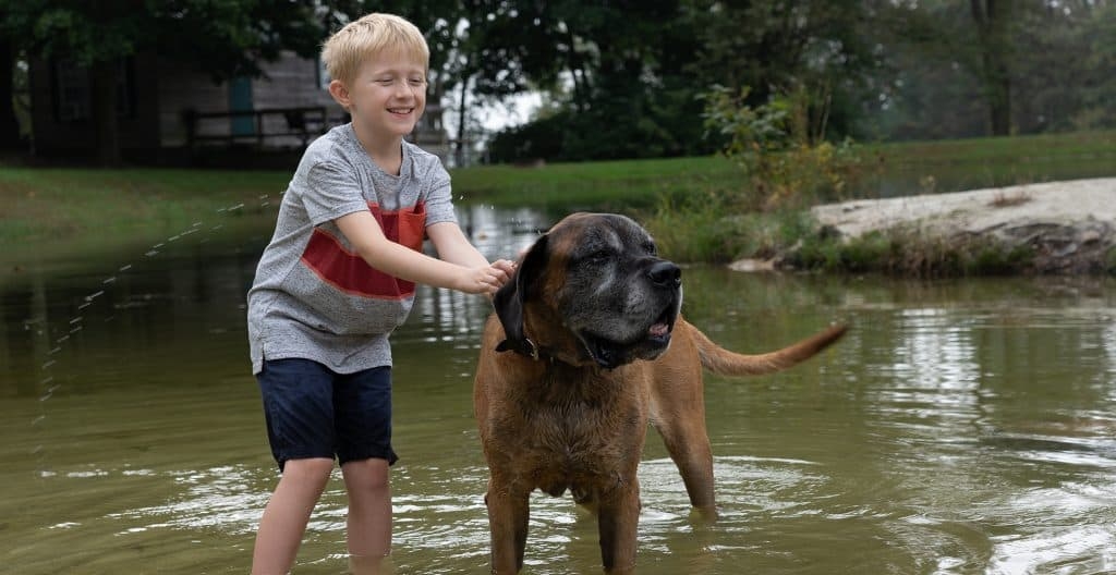 english-mastiff-in-the-lake