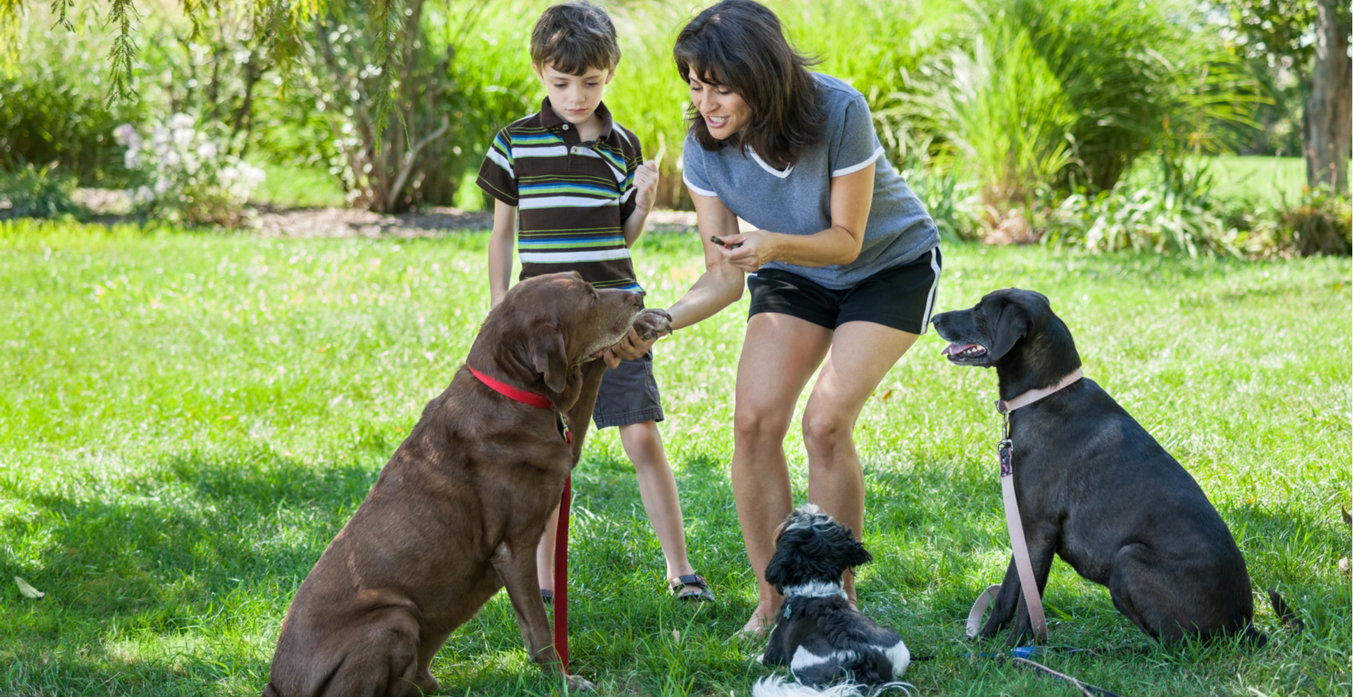 training-collaborative-effort-with-dog