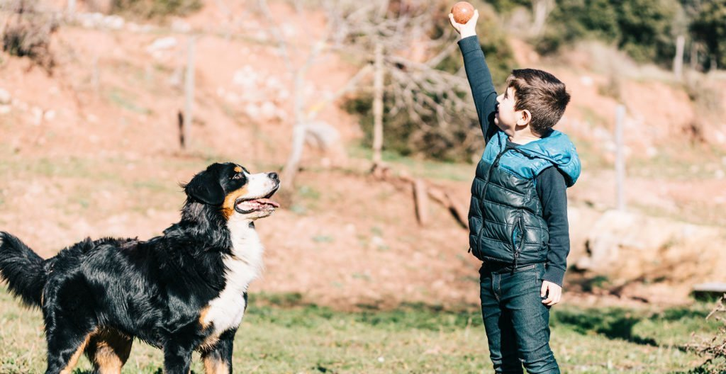 bernese-mountain-dog-exercise