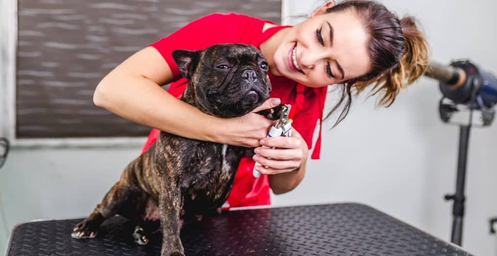 bulldog-grooming
