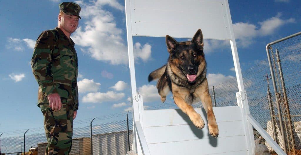 german-shepherd-training