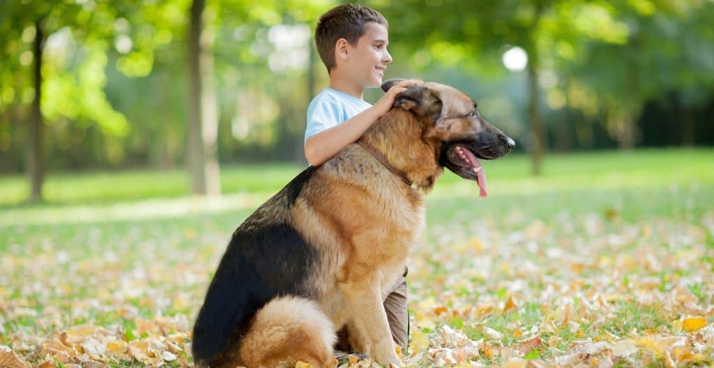german-shepherd-with-boy-owner