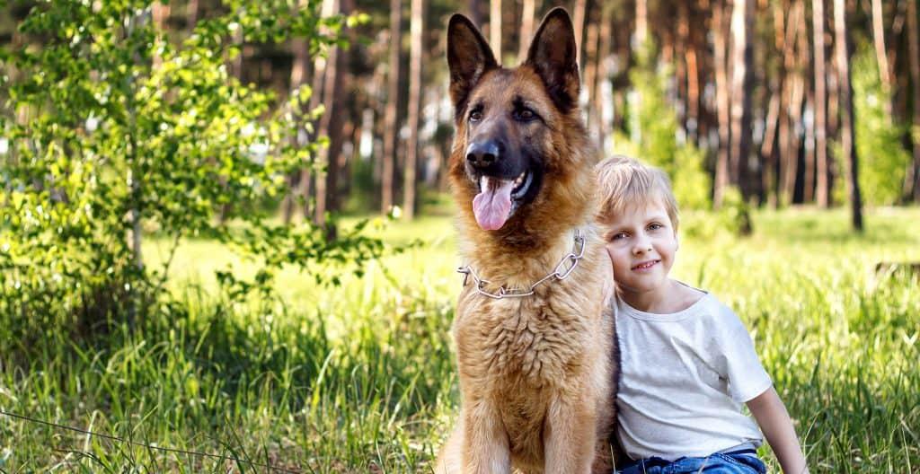 german-shepherd-with-young-boy-relaxing