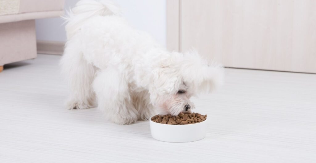 best-dog-food-for-bad-teeth