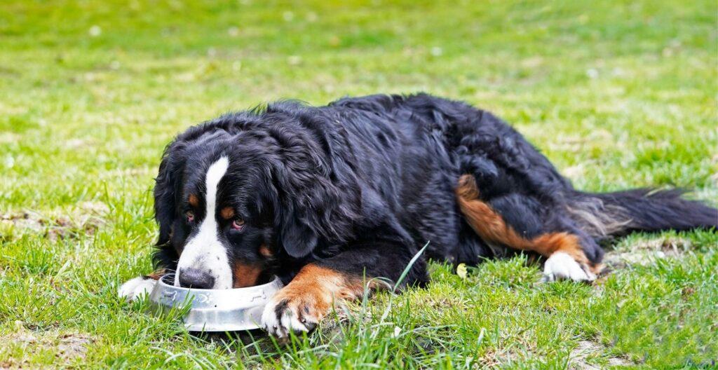 best-dog-food-for-hip-dysplasia