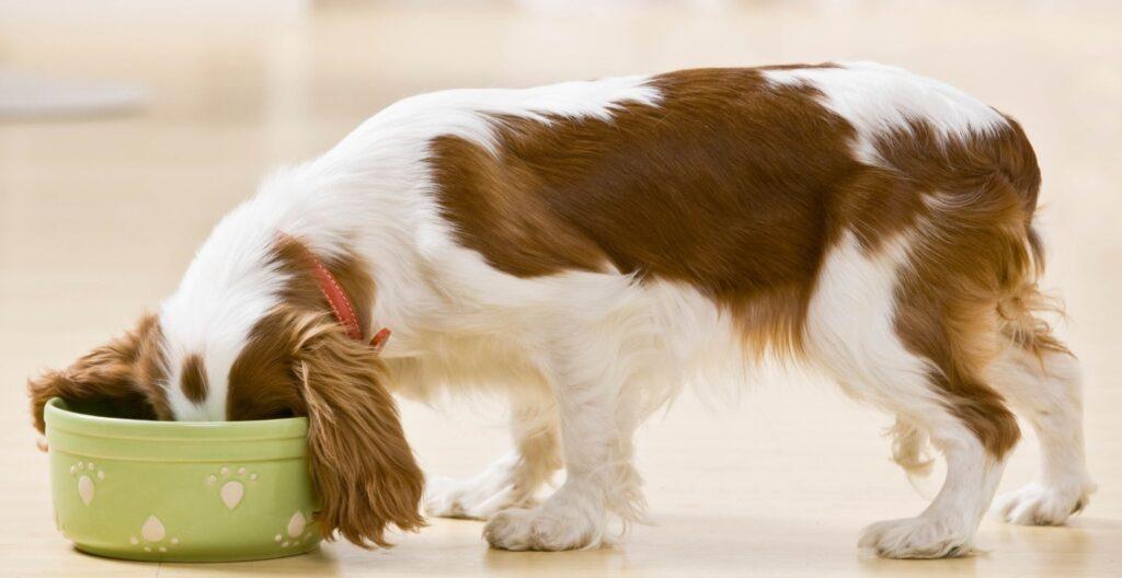 best-low-sodium-dog-food