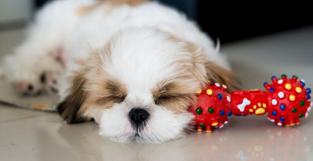 why-is-my-puppy-sleeping-so-much