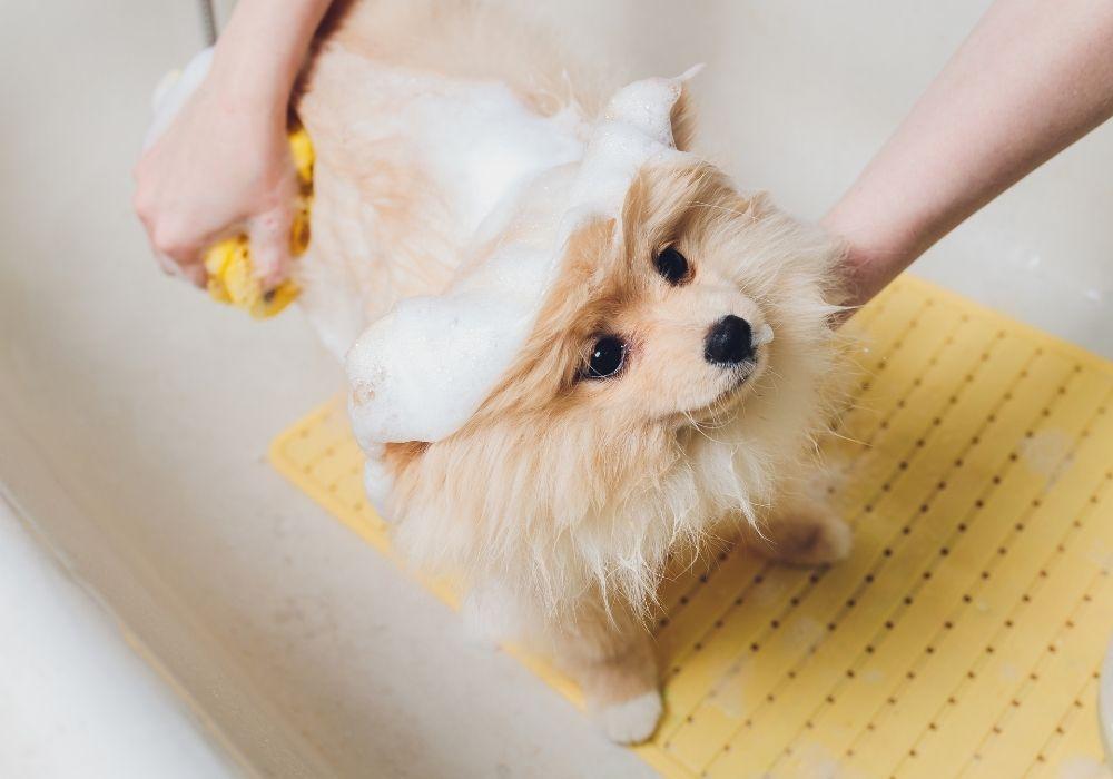 bathing-a-puppy