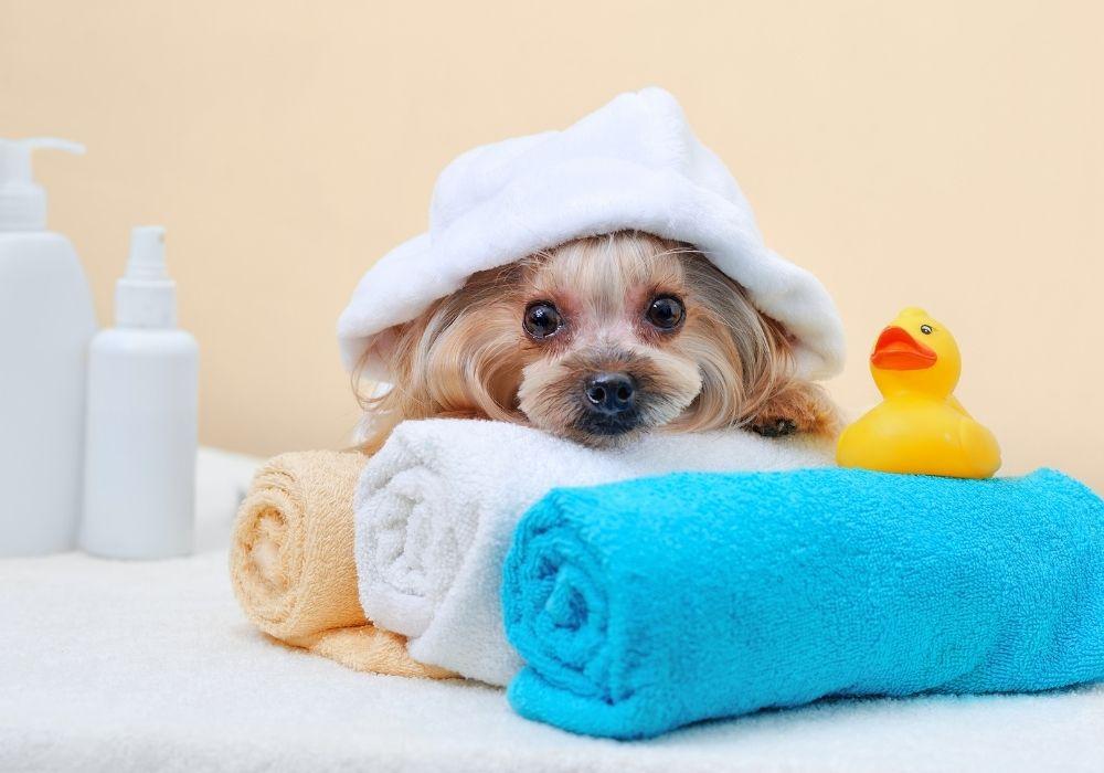 puppy-bath-essentials