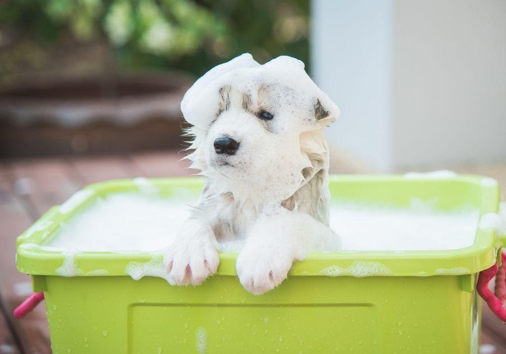 puppy-bath-outdoor