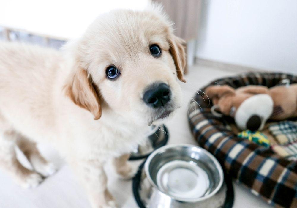puppy-hygiene