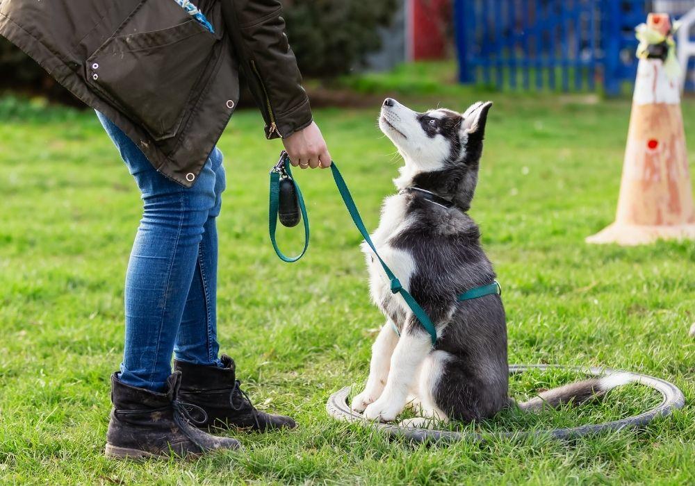 training-reward-for-puppy