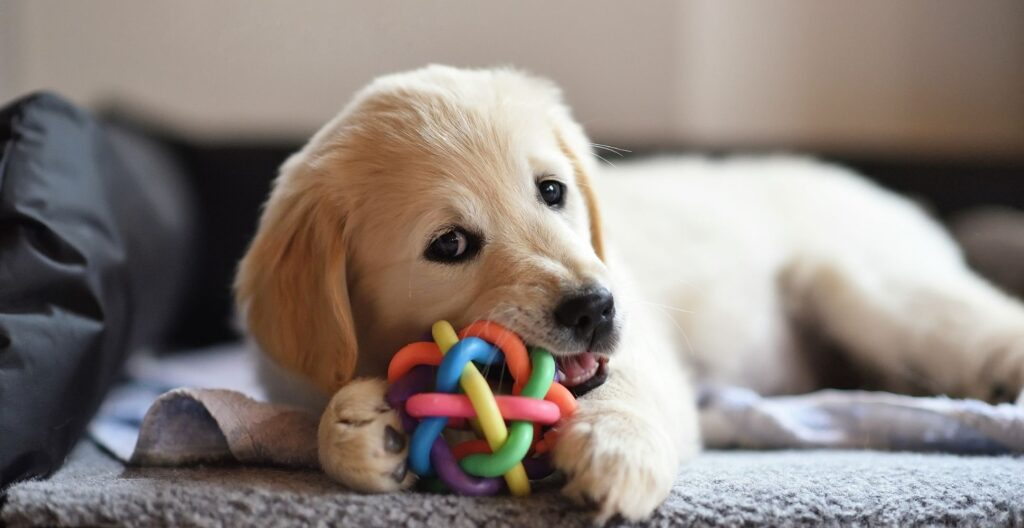 best-toy-for-dog-home-alone