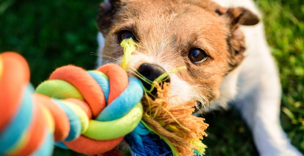 best-tug-of-war-dog-toy