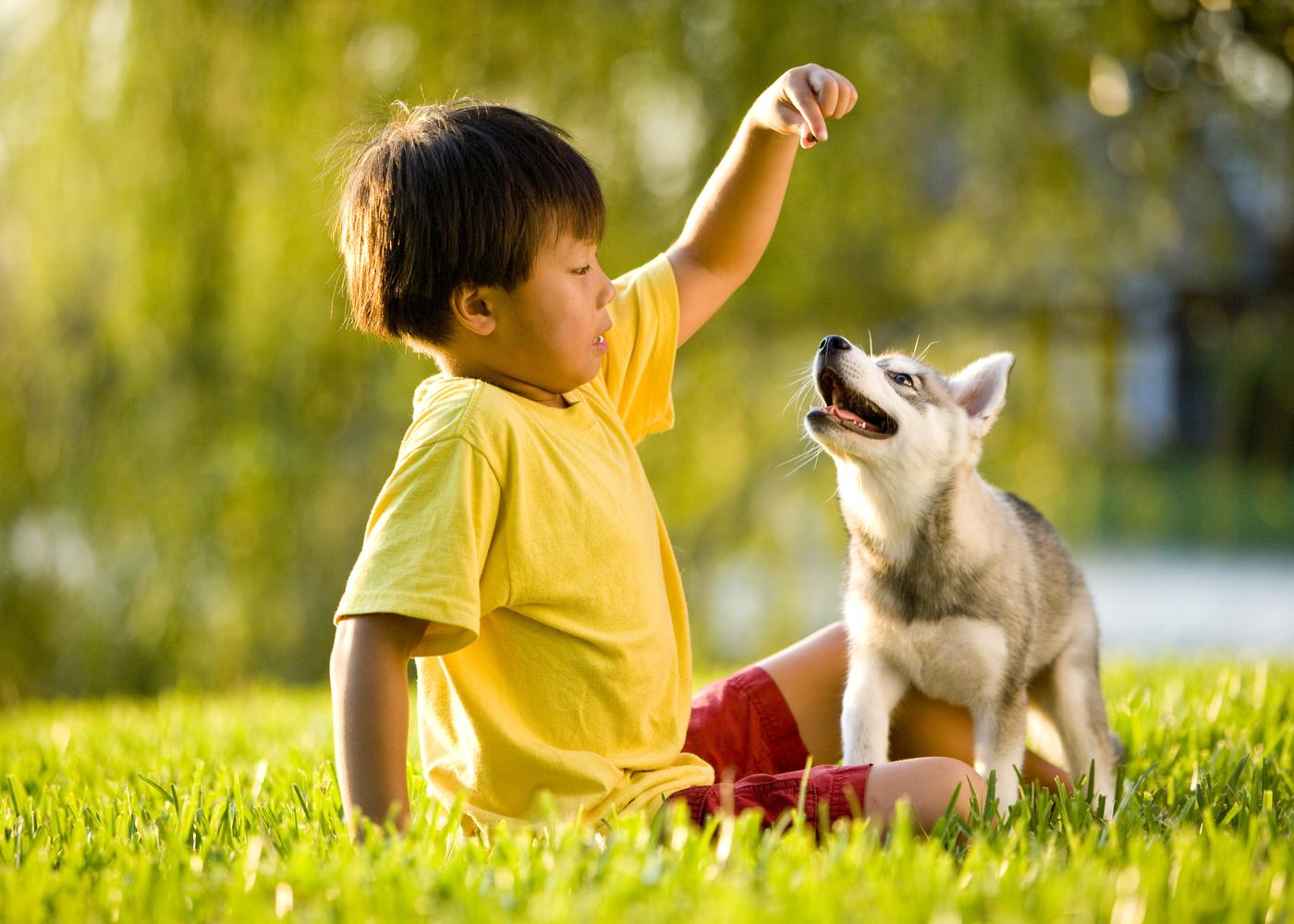 alaskan-klee-kai-dog-breed-guide-feeding