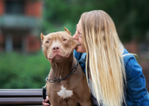 american-pit-bull-terrier-dog-breed-personality