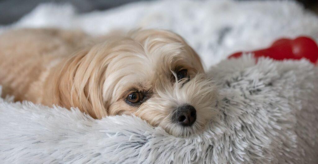 best-calming-dog-bed