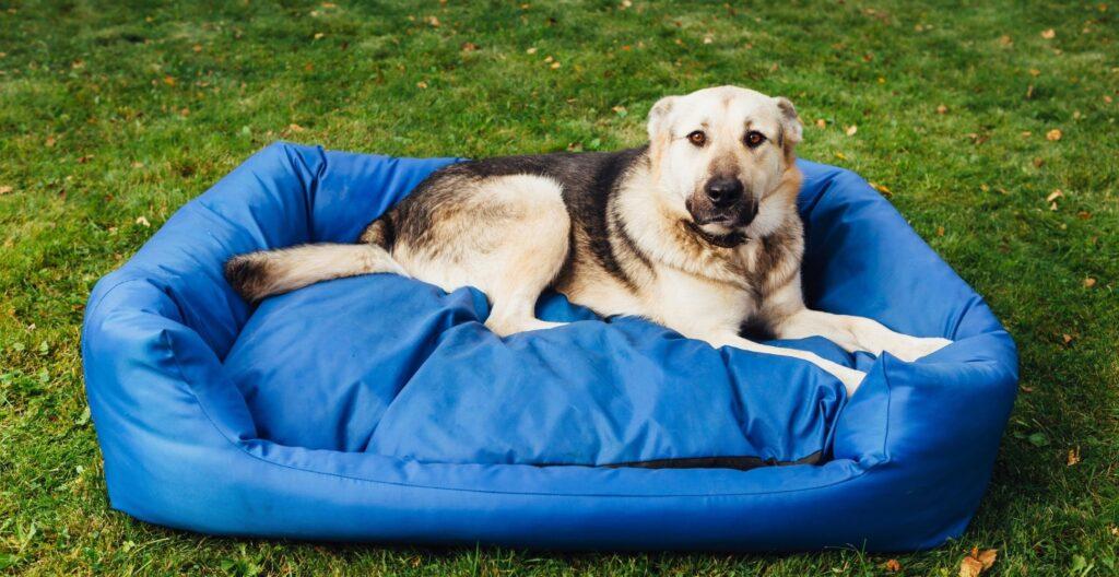 best-dog-bed-for-shedding