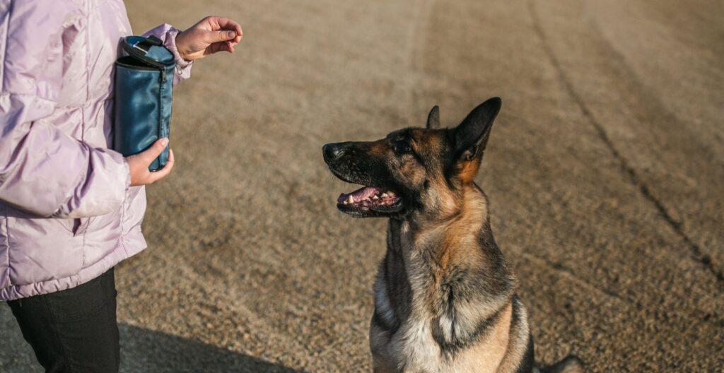 best-dog-training-treat-pouch