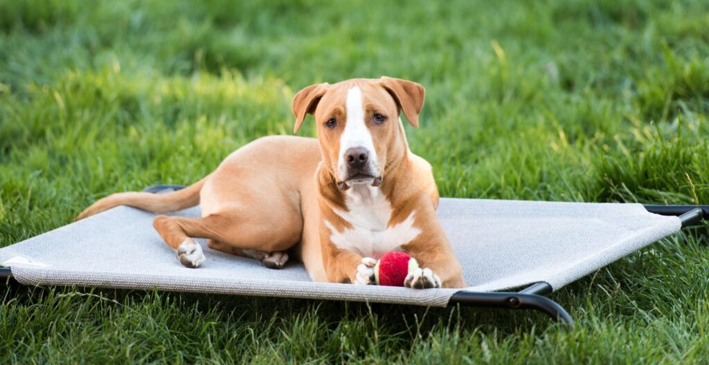 best-indestructible-dog-bed
