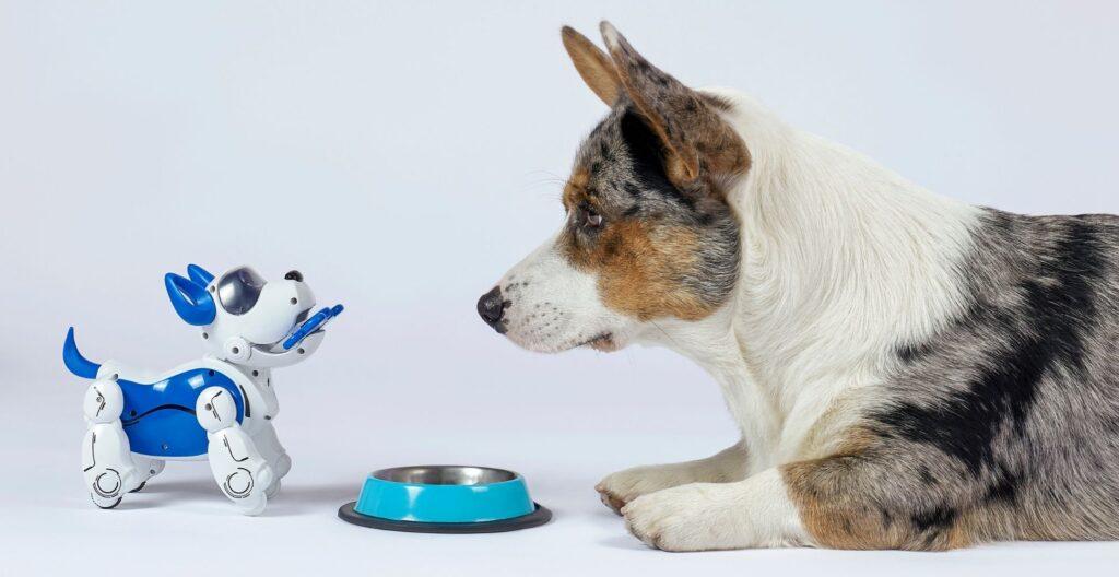 best-motorized-dog-toy