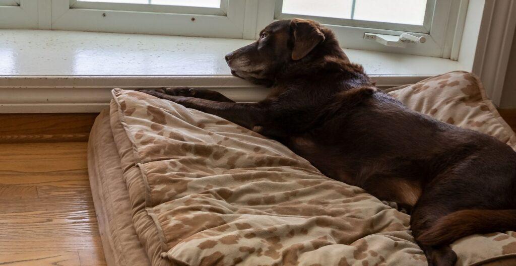 best-orthopedic-dog-bed