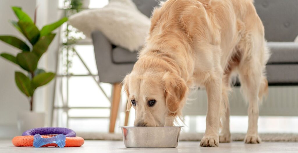 how-to-soften-dry-food