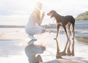 saluki-dog-breed-personality
