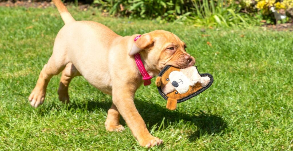 best-squeaky-dog-toy