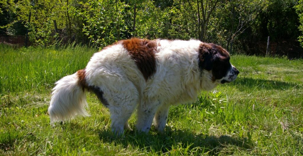 constipated-dog-reasons-solutions