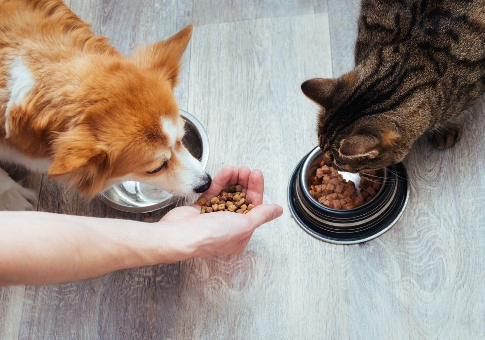 dog-and-cat-eating-food