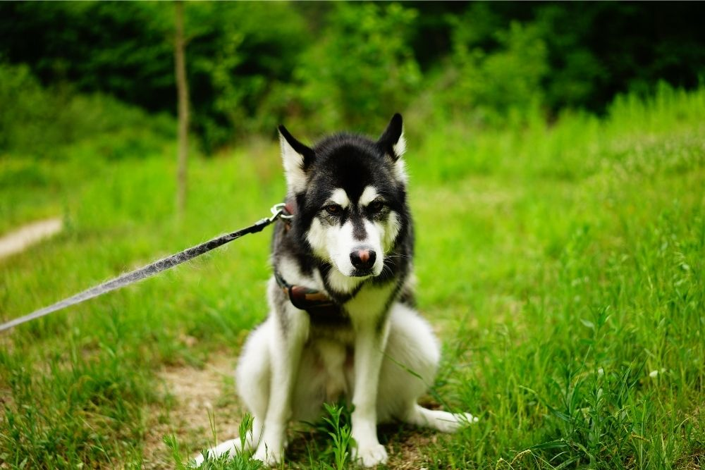 dog-constipation-reasons