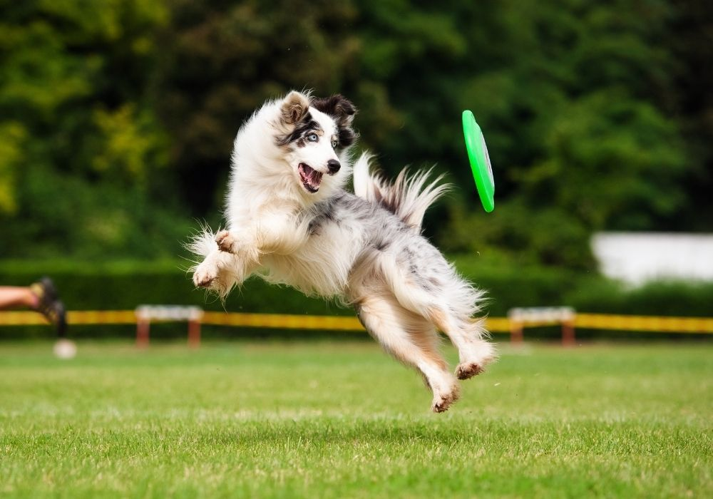 dog-exercise-playing-outdoors