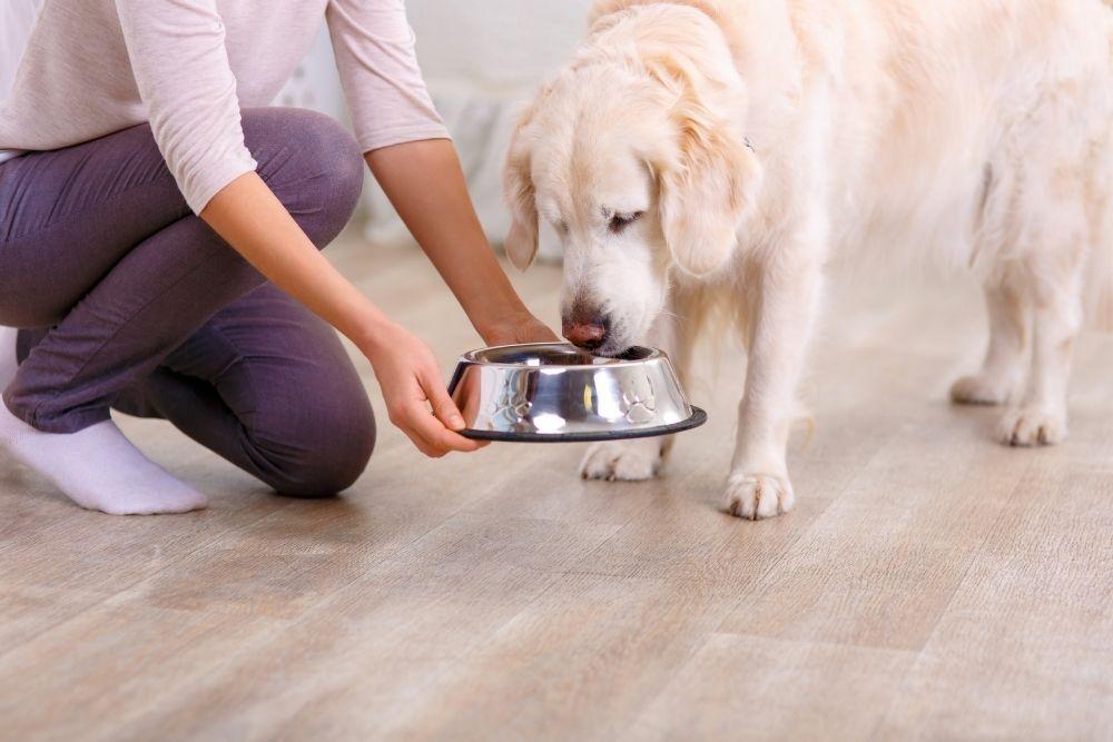 dog-feeding-guideline