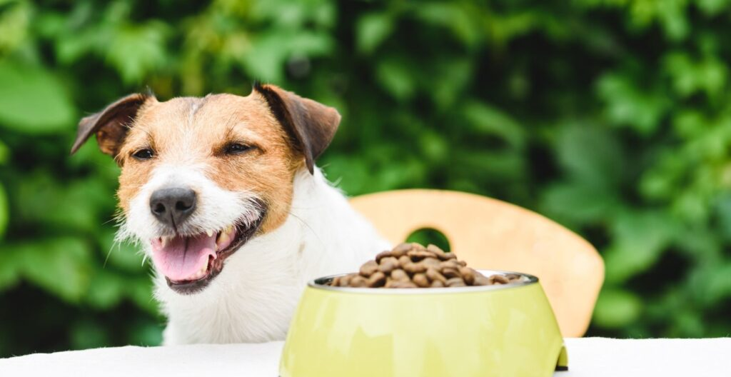 dog-food-ingredients-you-should-avoid