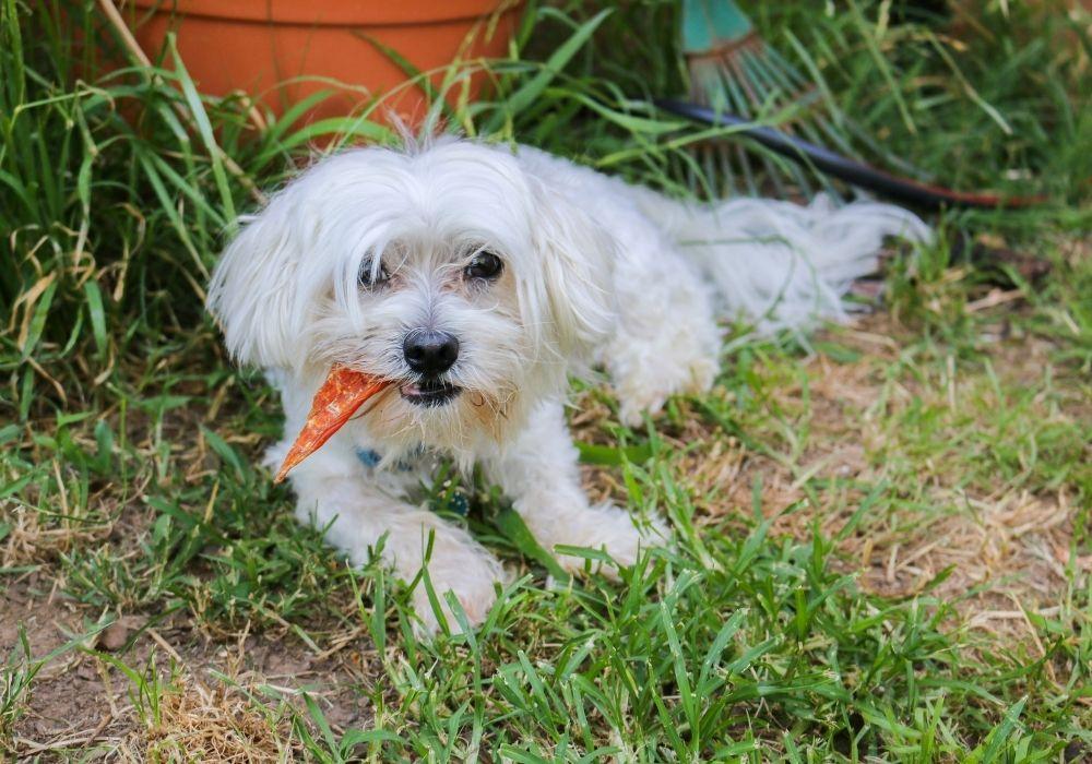 dog-treat-in-garden